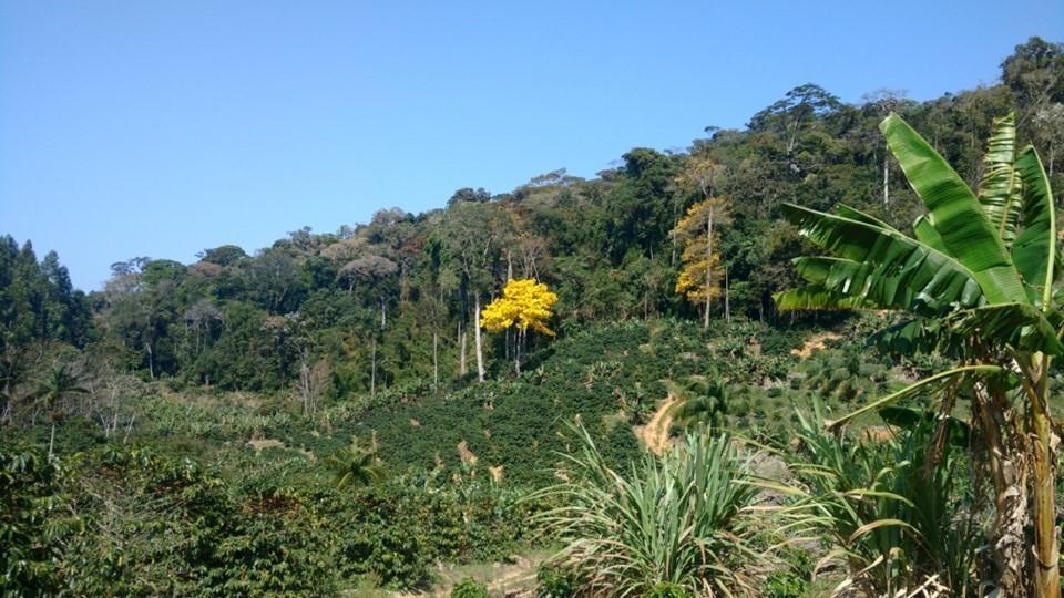 ES deve chegar a um milhão de hectares de vegetação nativa nos próximos anos