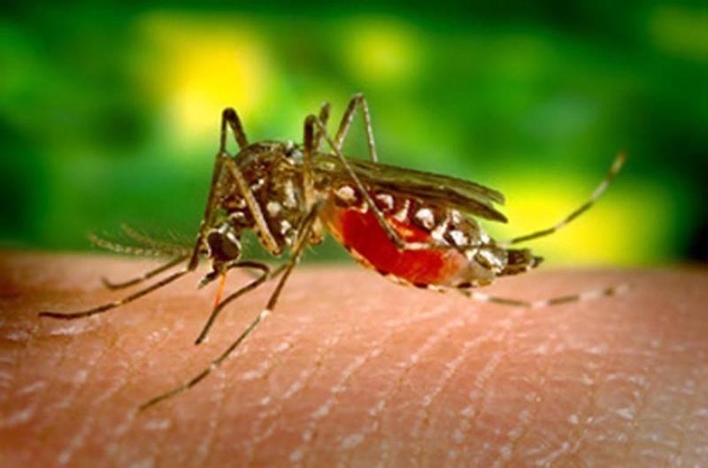 Febre é sintoma de dengue e de outras doenças da época