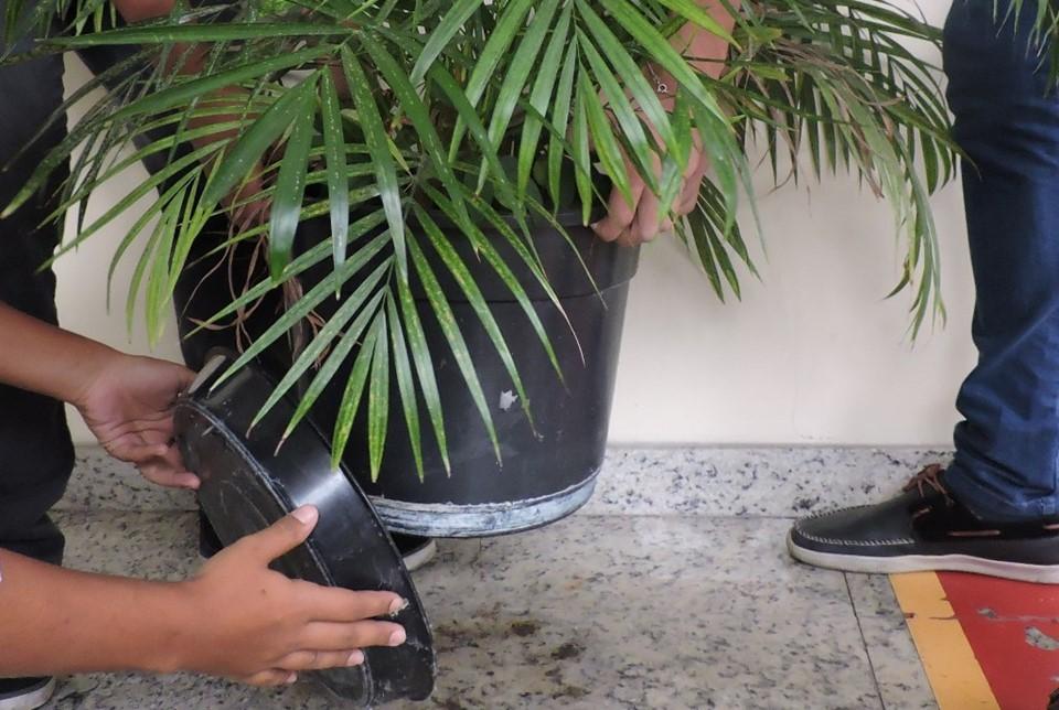 Vai viajar no Carnaval? Deixe a casa limpa e evite focos do Aedes Aegypti